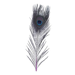 Quill pavo real Baetis