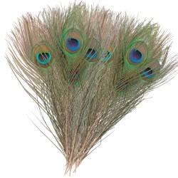 Peacock eyes Veniard